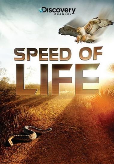 探索频道:生命的速度