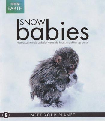 冰上动物宝宝