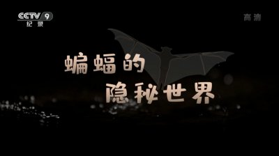 蝙蝠的隐秘世界