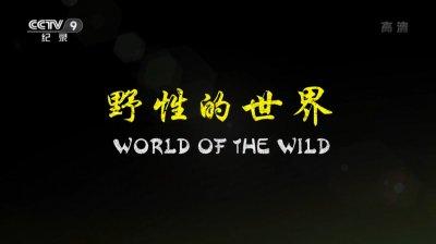野性的世界