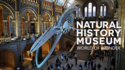 英国自然历史博物馆神奇世界